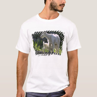 A mountain goat nanny nurses her kid in T-Shirt