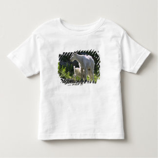 A mountain goat nanny nurses her kid in toddler t-shirt