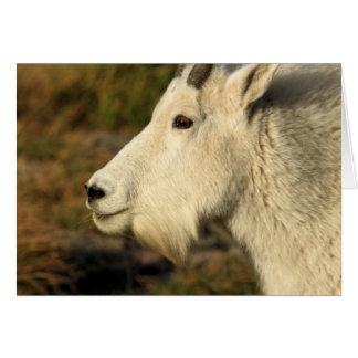 A Mountain Goat Near Logan Pass At Glacier NP Card