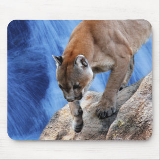 A mountain lion at the waterfall mouse pad