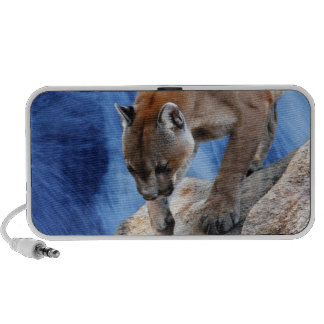 A mountain lion at the waterfall travel speakers