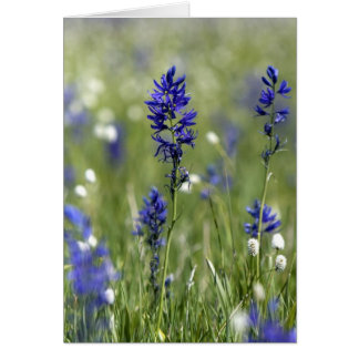 A mountain meadow of wildflowers including card