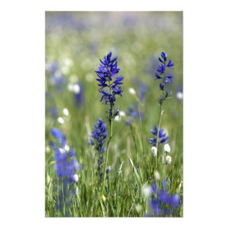 A mountain meadow of wildflowers including photo print