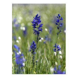 A mountain meadow of wildflowers including postcard