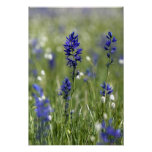 A mountain meadow of wildflowers including poster