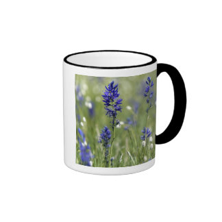 A mountain meadow of wildflowers including ringer mug