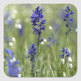 A mountain meadow of wildflowers including square sticker