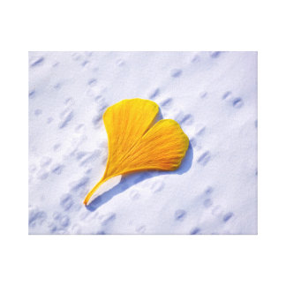 a multicolored ginkgo sheet in the autumn, canvas print