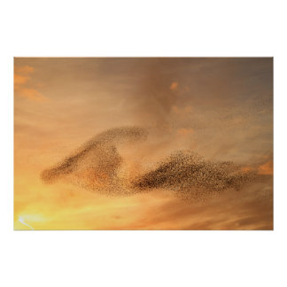 A Murmuration of Starling Print