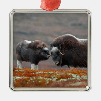 A Musk Ox and Calf Metal Ornament