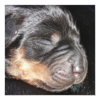 A New Arrival - Rottweiler Puppy Card
