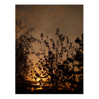 A New Day Dawns | Postcards