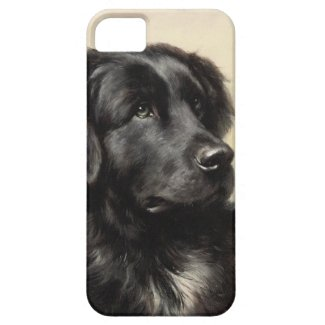 A Newfoundland ID iPhone 5 Case