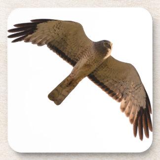 A Northern Harrier soars overhead Beverage Coaster