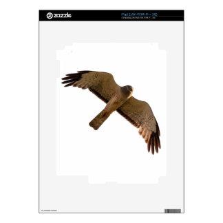 A Northern Harrier soars overhead iPad 2 Decal