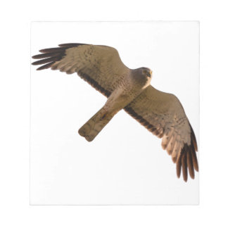 A Northern Harrier soars overhead Notepad