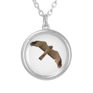 A Northern Harrier soars overhead Silver Plated Necklace