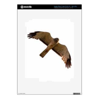 A Northern Harrier soars overhead Skin For iPad 3