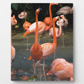 A number of Flamingos Photo Plaque