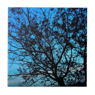 A old tree with beautiful blue sky as backdrop small square tile
