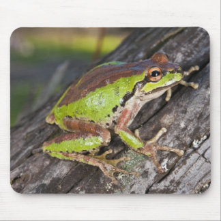 A Pacific treefrog perched on a log Mouse Pad