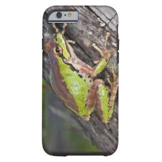 A Pacific treefrog perched on a log Tough iPhone 6 Case