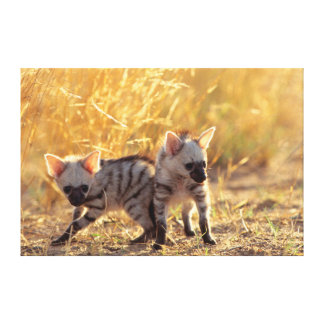 A pair of Aardwolf cubs at play Canvas Print