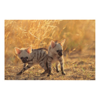 A pair of Aardwolf cubs at play Wood Wall Decor