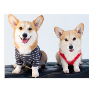 A Pair Of Corgis Sitting On A Bench Postcard