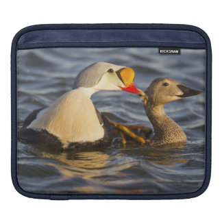 A pair of courting king eiders in a tundra pond sleeve for iPads