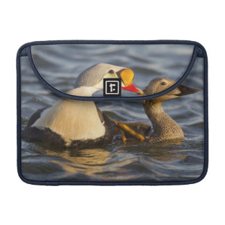 A pair of courting king eiders in a tundra pond sleeve for MacBooks