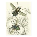 A Pair of Flies Postcards