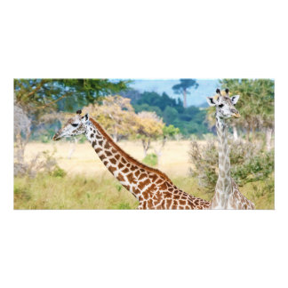 A Pair of Giraffes in the Mikumi National Park Card