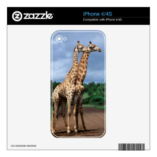 A Pair Of Giraffes On Road, Kruger National Skin For iPhone 4