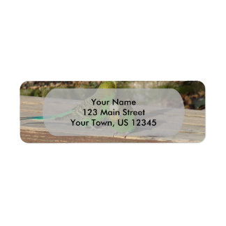 A Pair of Green Budgies on a wooden bench Label