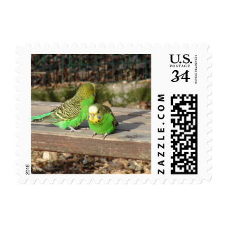 A Pair of Green Budgies on a wooden bench Postage