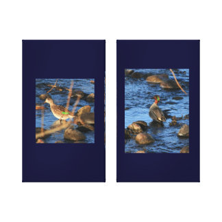 A Pair of Green -Winged Teal Ducks Canvas Print