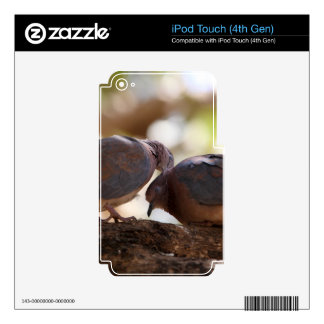 A pair of laughing doves iPod touch 4G decals