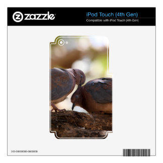 A pair of laughing doves (Spilopelia senegalensis) Decals For iPod Touch 4G