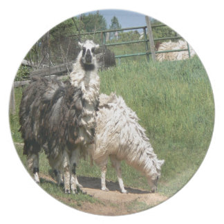 A Pair of Llamas With Exceptionally Lg Wooly Coat Party Plates