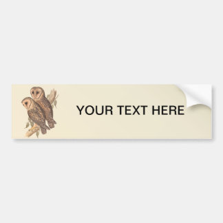 A Pair of Masked Barn Owls on a branch (painting). Car Bumper Sticker