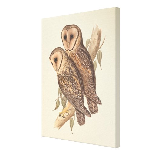 A Pair of Masked Barn Owls on a branch (painting). Gallery Wrap Canvas