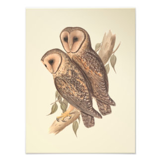 A Pair of Masked Barn Owls on a branch (painting). Photo Print