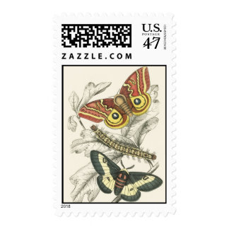 A Pair of Moths Postage Stamps