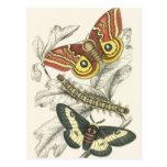 A Pair of Moths Postcards
