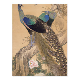 A Pair of Peacocks in Spring by Imao Keinen Postcard