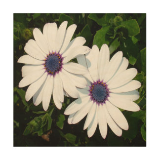 A Pair of Pristine White African Daisies Wood Wall Art