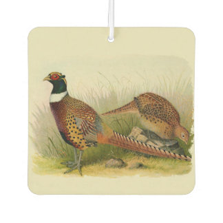 A pair of Ring necked pheasants in a grassy field Air Freshener
