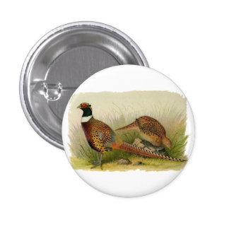 A pair of Ring necked pheasants in a grassy field 1 Inch Round Button