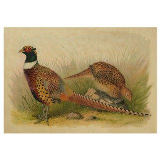 A pair of Ring necked pheasants in a grassy field Wood Poster